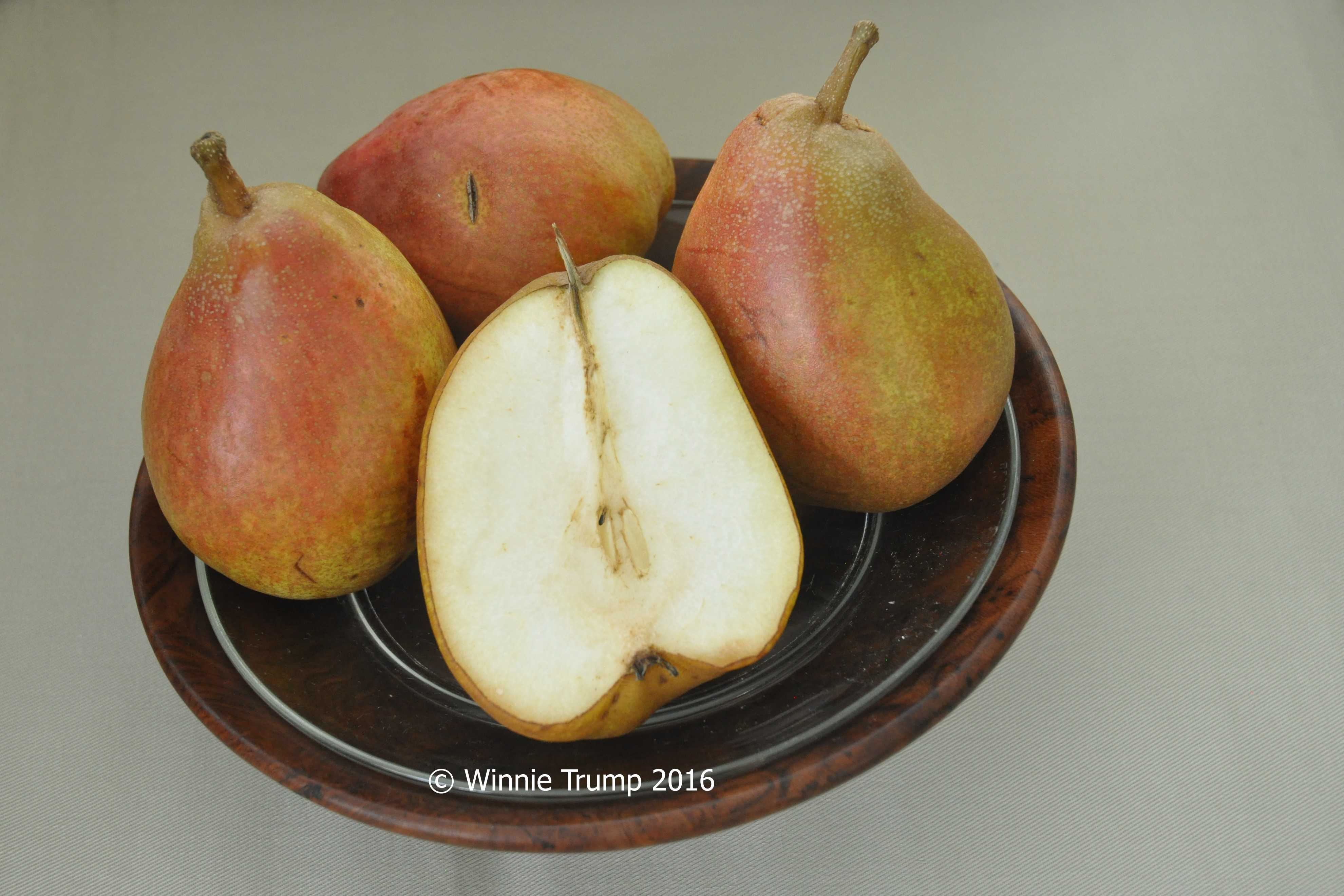 Bowl of Pears