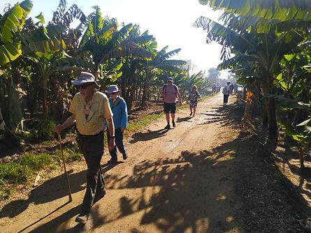 banana walk.jpg