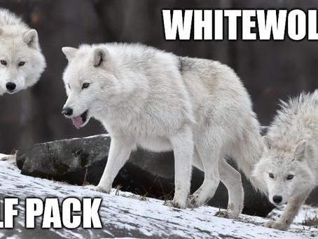 GO TO WHITEWOLFPACK.ORG