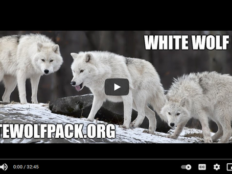 OUR WOLF PACK