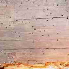 Avisual inspection of the home for any evidence of wood destroying insect infestation or wood damage caused by insects, such as termites, carpenter ants, carpenter bees, and powder post beetles.