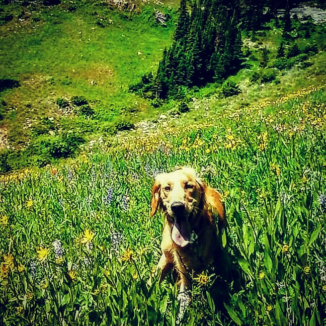 Hiking Bridger Bowl with Kona the Golden Retriever Trailhead Safety and Crime Prevention in Bozeman Montana