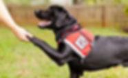 training-service-dogs-2.jpg