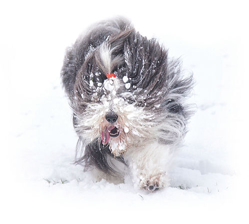 Piper Snow_Home Image copy.jpg