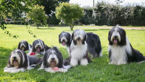 pet photos website  12  px.jpg