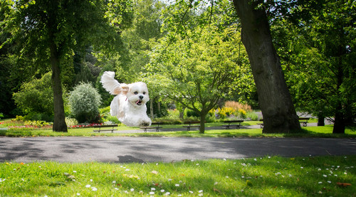 pet photos website  40  px.jpg