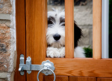 pet photos website  09  px.jpg
