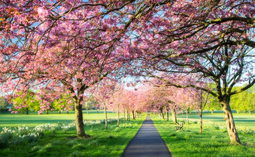 landscape travel webiste 001  px.jpg