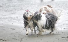 pet photos website  21  px.jpg
