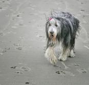 pet photos website  25  px.jpg