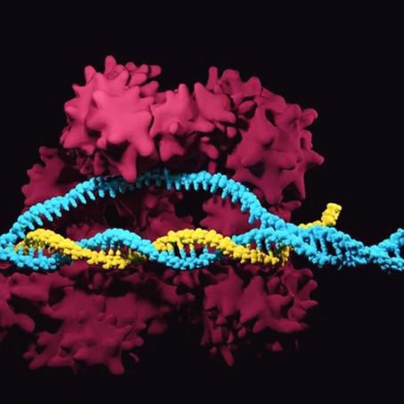 Genetik Alanında Büyük Keşif -CIRSPR-CAS 9-