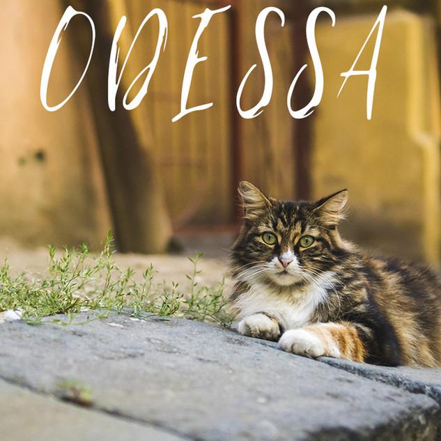 Exploring Odessa City, Ukraine.jpg