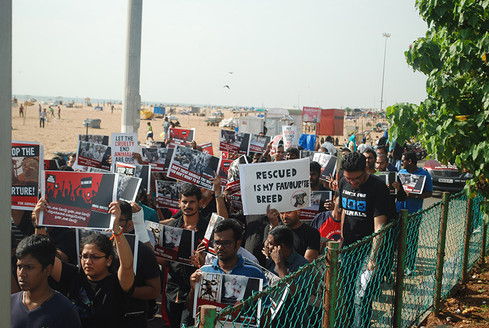 An animal rights march.JPG