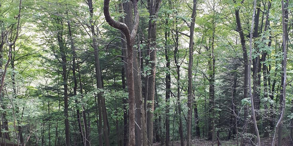 Duffins Trail North