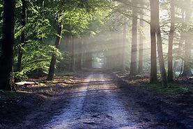 road-815297_960_720.jpg