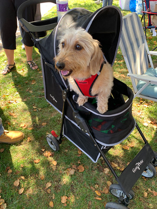 tan pup stroller.jpg