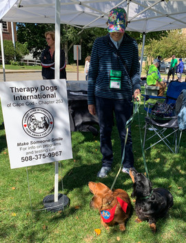 therapy dogs.jpg