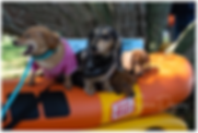 dogs wienermobile.png