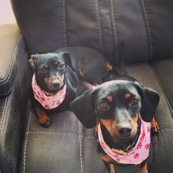 Sophie & Zoey, Springfield, MA