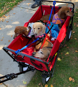 wagon wieners.jpg