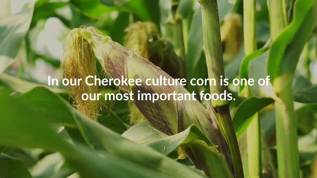 Cherokee Green Corn Ceremony
