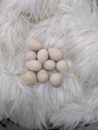 1 Dozen Mt. Quail Hatching Eggs (21 Days)