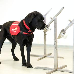UK Deploys Sniffer Dogs To Detect Fuckboy Virus