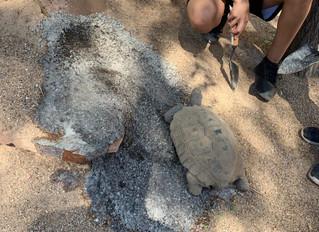 Our New Pet, Tortoise Ben