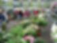 tuinbraderie