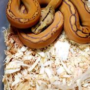snake 14.jpg