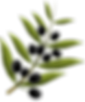 olives-1992013_640.png