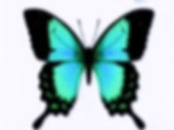 butterflysm_edited_edited_edited.jpg