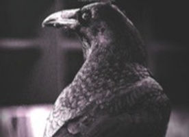 raven-bg_edited_edited.jpg