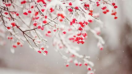 snow-and-berries-1.jpg