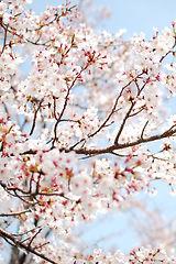Fabulous-Spring-Flower-cropped.jpg