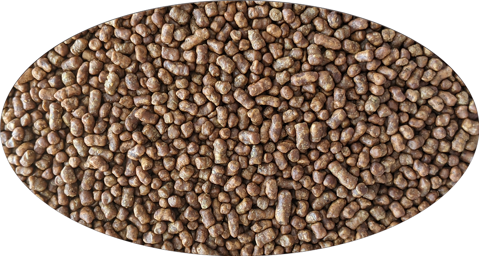 Ku Qiao Cha (Buckwheat tea)