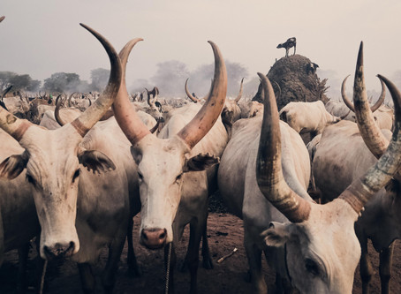 ASHES TO ASHES | The Mundari of South Sudan.