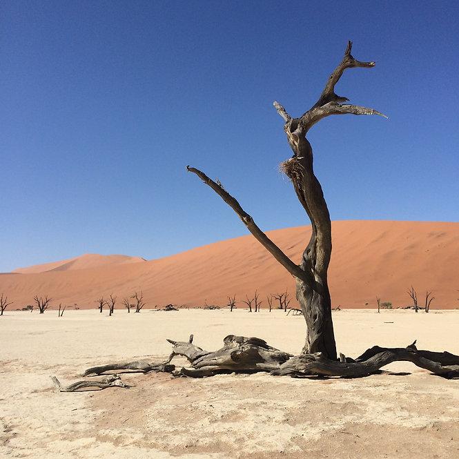 Sossusvlei - dried lake