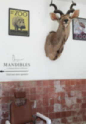Mandibles cape town