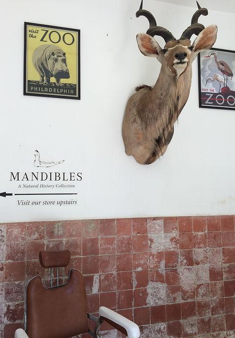 Mandibles cape town