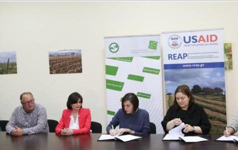 ერთობლივი პროექტი - USAID/REAP, APMA & ISO Consulting