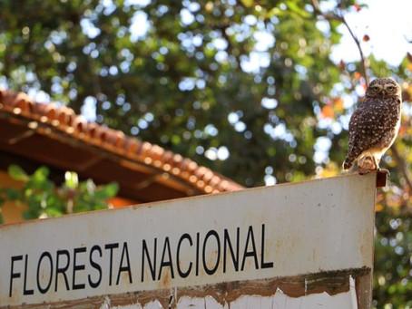 Floresta Nacional de Brasília e outros 8 parques estão em lista de privatizações de Bolsonaro