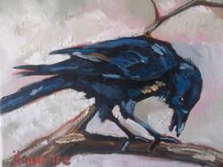 """""""Raven"""""""