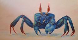 Blue Crab 2