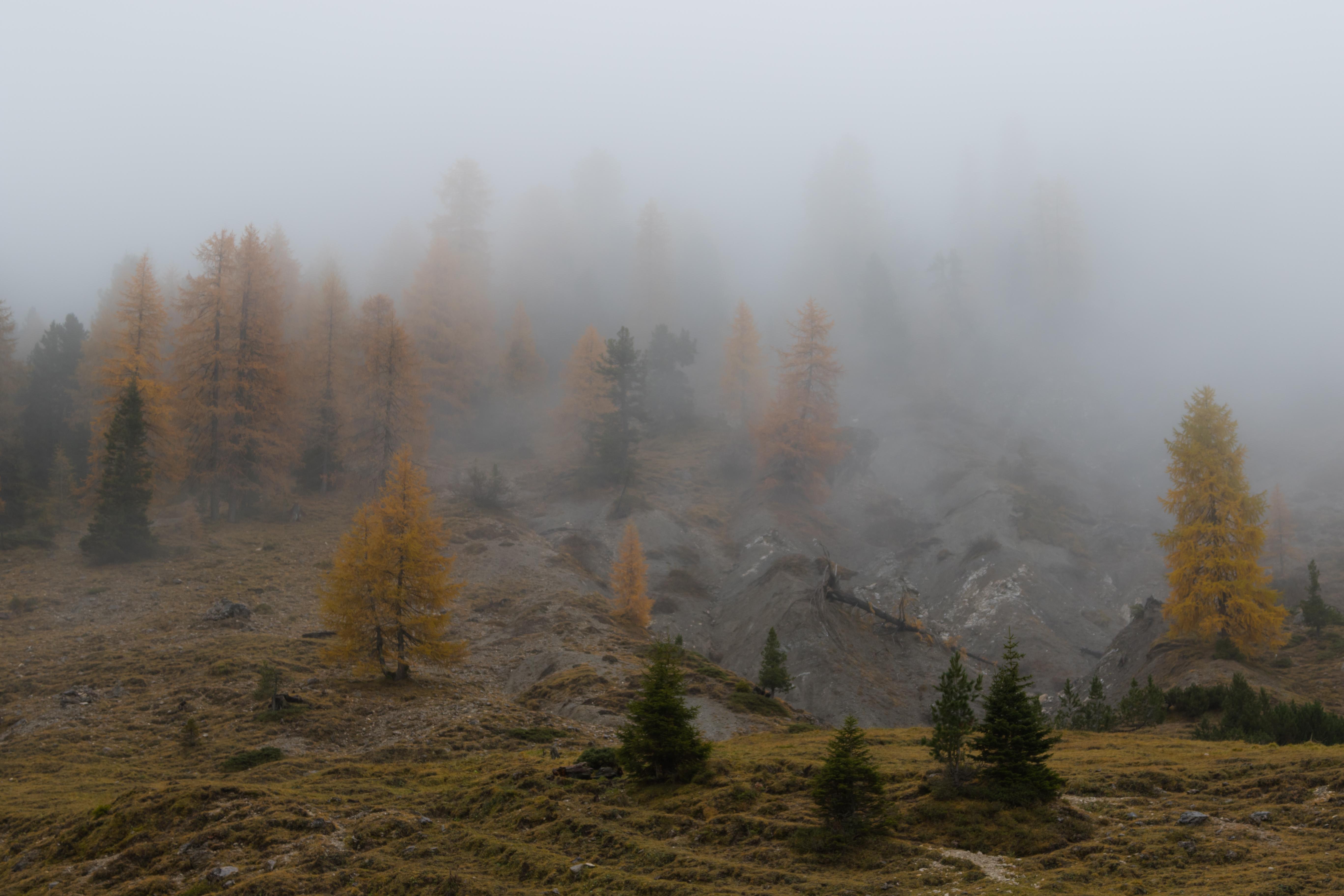 Forsest Fog.