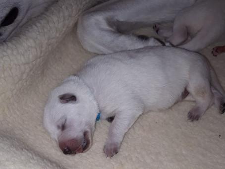 De pups zijn geboren!
