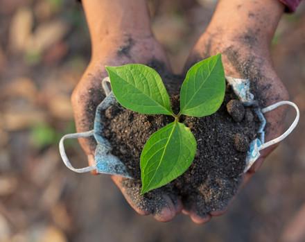 Doações verdes: a filantropia internacional para o meio ambiente no Brasil