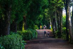 Parque do Canário