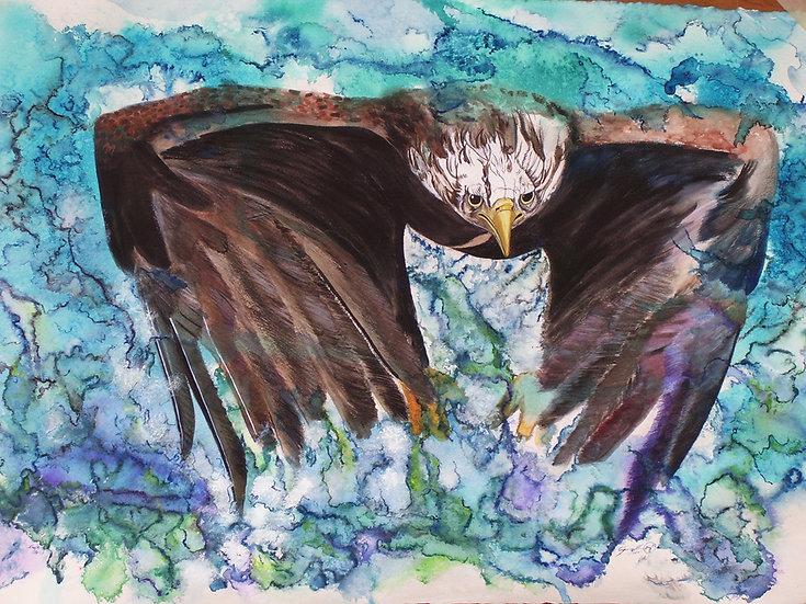 Eagle - In Flight - Framed
