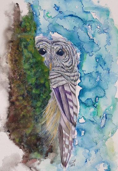 i OWL